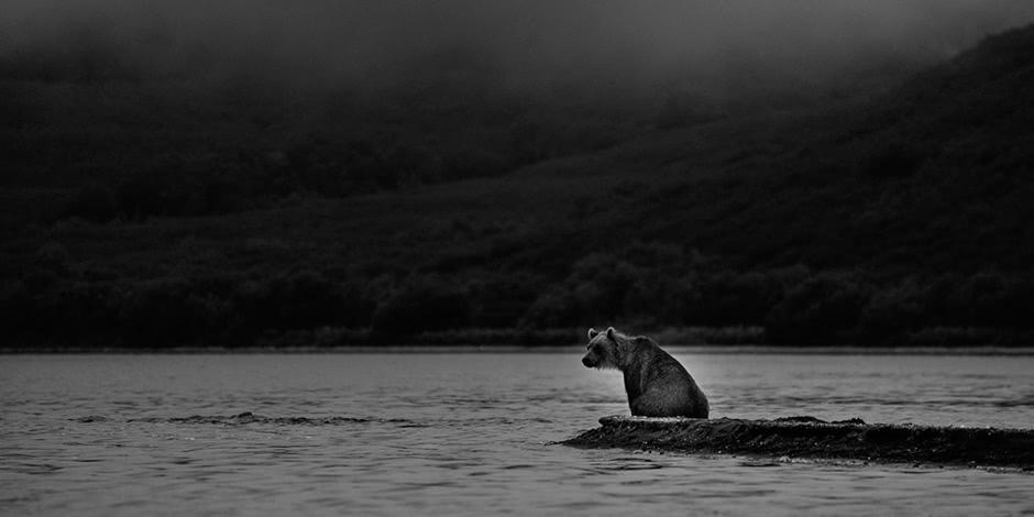 Incredible wild world of Russia: Kamchatka Region