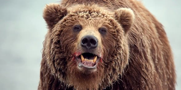 Russian bears: Photos of ferocious animals from Kamchatka