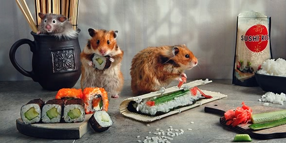 Unknown hamsters life: Humorous photos by Elena Eremina