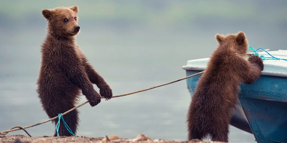 Ungentle charm of Kamchatka bears in photos by Sergey Ivanov