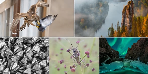Winners and favourites of the contest Wild Nature of Russia 2017